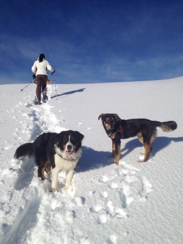 Ciaspolata cani