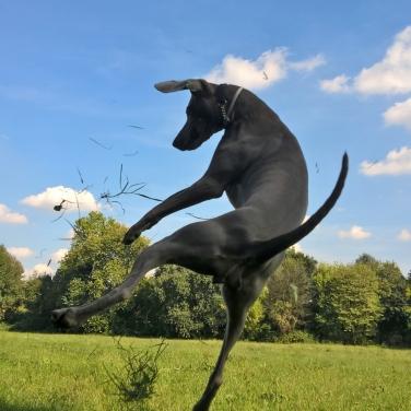 addestramento cani Monza