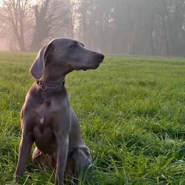Dog sitter Monza