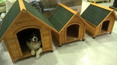 Addestramento cani Villasanta