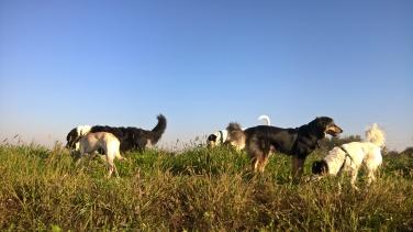 Asilo cani Arcore