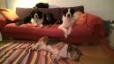 Pensione cani Monza